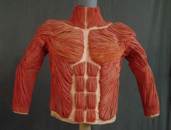 Muskelanzug<br>
